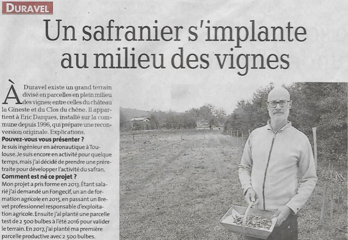 Article La Dépêche du Midi - Un safranier s'implante au milieu des vignes !
